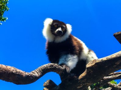 Les espèces endémiques risquent de disparaître à cause de la pollution de l'environnement
